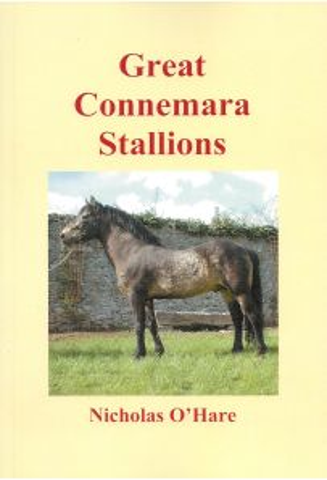 Great Connemara Stallions